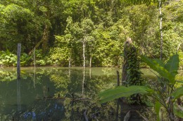 Tropical jungle lake in Thailand, Krabi, Lanta