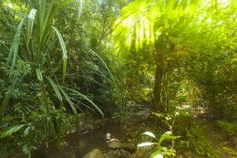 River in jungle in Thailand, Krabi, Lanta