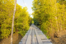 Path through Mangrove forest in the national park Lanta Krabi Thailand