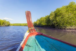 Boat trip in the mangroves forest Lanta Thailand